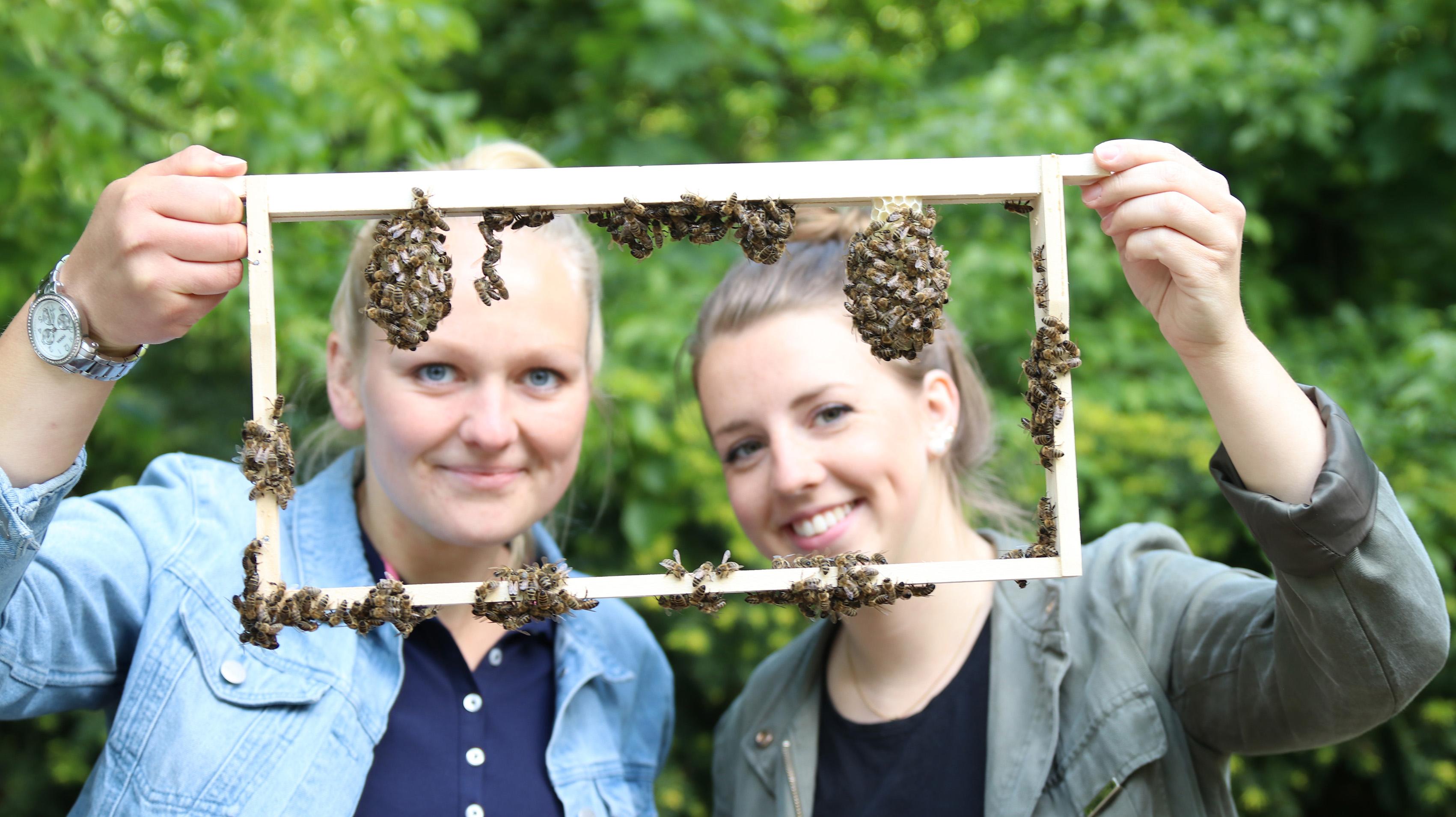 Zwei Studentinnen mit Drohnenrahmen und Bienen daran