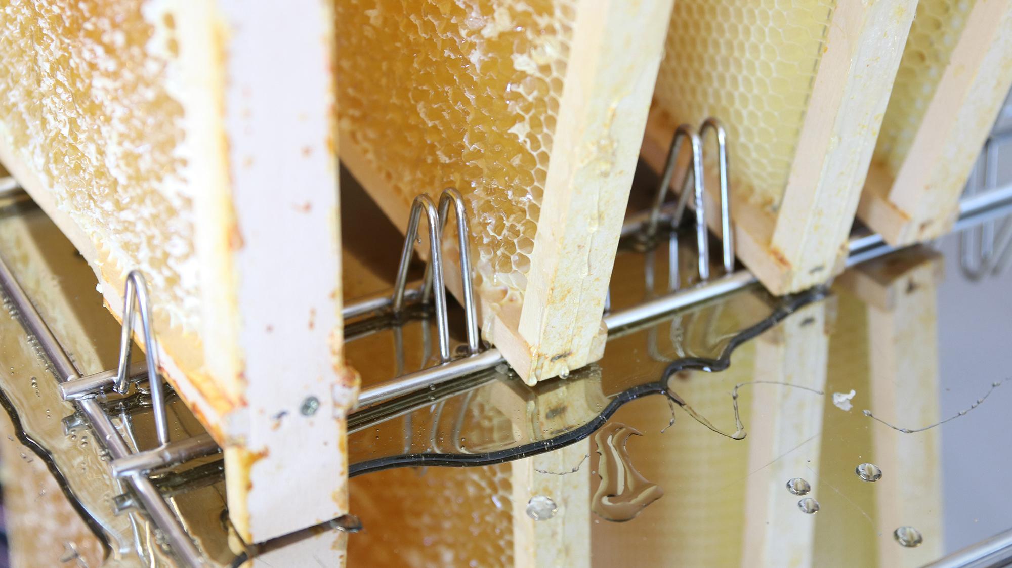 Der Honig fließt aus den Rahmen ab.