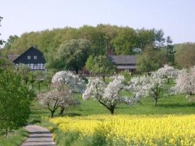 Streuobstwiesen prägen die Münsterländer Parklandschaft (Foto: Klaus Schulte)